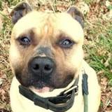 1 an après son adoption, ce chien a été abandonné. En découvrant pourquoi les volontaires sont furieux