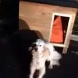 En pleine nuit, un homme abandonne son chien devant un refuge : il n'avait pas prévu un petit détail