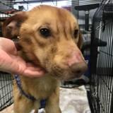 Elle entre dans un refuge et dit qu'elle a trouvé un chien affamé, mais la vérité fait froid dans le dos