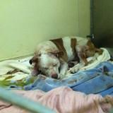 Ce chien devait être euthanasié, mais un petit détail a absolument tout changé