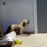 Il voit un chien gratter une porte, s'approche et ne peut retenir ses larmes