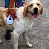 Elle abandonne son chien près d'un refuge avant de chercher à le récupérer