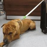Ils trouvent un chien attaché dans une gare, en ouvrant la valise à côté de lui ils n'en reviennent pas