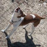 Mon chien aboie trop, que faire ?