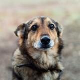 Des chiens aspergés à l'acide ou au gaz lacrymogène dans les Hautes-Pyrénées