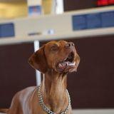 Un terminal rien que pour les animaux à l'aéroport JFK de New York