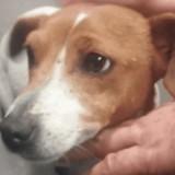 Leur chien n'est pas autorisé à monter dans l'avion avec eux : ils prennent la plus cruelle des décisions