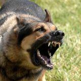 Chien agressif et mordeur : une fatalité ?