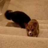 Un chien aide un chiot à monter les escaliers (Vidéo du jour)