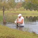 À 74 ans, il se jette à l'eau pour délivrer son chien de la bouche d'un alligator (vidéo)