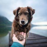 Dômes Pharma lance son appel à projets pour soutenir financièrement la médiation animale !