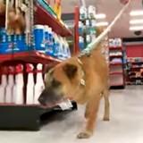 Il entre dans une animalerie avec un chien, les employés sont bouche bée quand ils voient ce qui se passe