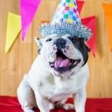 5 conseils pour offrir à votre chien son plus bel anniversaire !