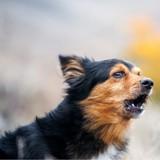 Ivre, il menace son voisin avec une hache et refuse de lui rendre son chien