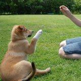 L'apprentissage du chien : les erreurs à ne pas faire