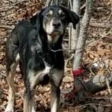 Ils trouvent un chien attaché à un arbre : le mot trouvé par terre leur donne des frissons