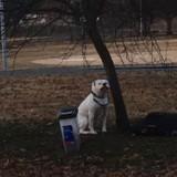 Elle voit un chien attaché à un arbre, s'approche et découvre un mot qui lui retourne le coeur