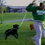 Le chien qui avait eu le bon tuyau.. (Vidéo du jour)