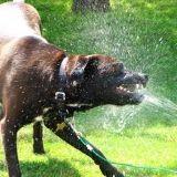 Les chiens et l'arrosage automatique (Vidéo du jour)