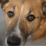 5 choses à savoir sur la leishmaniose canine
