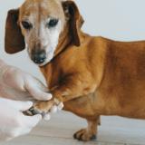 Infographie sur l'arthrose : ce que vous devez savoir sur cette maladie dégénérative qui touche 40% des animaux