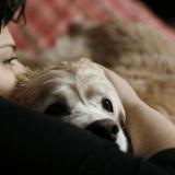 Des foyers d'accueil pour les animaux des victimes de violences conjugales