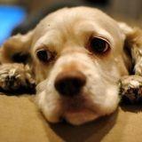 Et si les chiens étaient vraiment jaloux ?