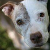 La leishmaniose : une maladie mortelle contre laquelle vous pouvez protéger votre chien