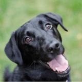 Et si une petite dose de stress pouvait être bonne pour les chiens ?