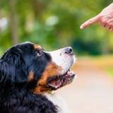 Apprendre l'ordre « Assis ! » à son chien (Vidéo)