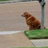 Son chien s'assoit tous les jours au même endroit sans bouger : elle voit le facteur arriver et a des frissons