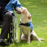 Cet homme tétraplégique s'est vu refuser l'accès à un commerce à cause de son chien d'assistance