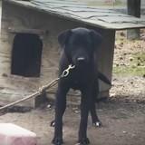 Elle voit un chien attaché à un poteau : en parlant à ses maîtres, elle prend une décision radicale