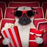 Un cinéma pour chiens va ouvrir ses portes en Angleterre !