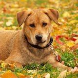 Faites de votre animal la star de l'automne et gagnez un abonnement à 30 Millions d'Amis !