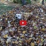 L'automne, saison préférée des chiens? (Vidéo du jour)