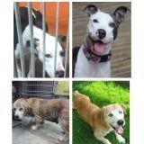 Bouleversant : les photos de chiens avant et après leur sauvetage