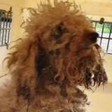 Elle trouve un chien dans une poubelle : le vétérinaire fait une découverte révoltante en l'examinant