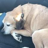 Mourante, son seul espoir est son chien : il n'est pas autorisé à prendre l'avion !