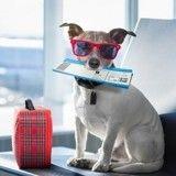 Comment habituer mon chien à voyager en avion ?