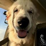 Il transporte des chiens dans un avion pour les sauver, quand tout d'un coup l'impensable s'est produit (Vidéo)