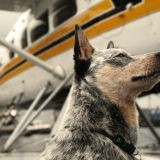 32 000 $ pour faire voyager son chien en Business Class