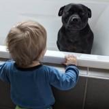 Elle cherche son chien partout et reçoit un message Facebook : elle se met à rire en voyant la photo