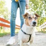 Choc en balade : elle promène son chien et fait une rencontre absolument inoubliable