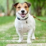 Play-Dogs : l'application qui vous fait découvrir des milliers de balades à faire avec votre chien !
