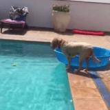 Ce que ce chien va faire pour ne pas se mouiller est incroyablement intelligent ! (Vidéo du jour)