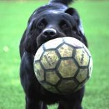 Un chien s'invite sur un terrain de foot (Vidéo du jour)
