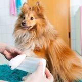 Covid-19 : Quelles sont les solutions pour soigner son chien ou chat pendant le confinement ?