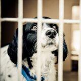 29 000 animaux adoptés en 2013 grâce à la SPA