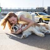 Cet homme, coupable de mauvais traitement envers un animal, a pu garder son chien